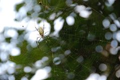 A spider. A big spider on its net outside in the nature Royalty Free Stock Images