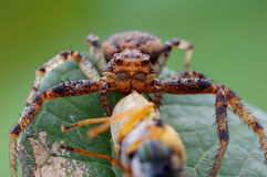 A pider with a posture Royalty Free Stock Photo