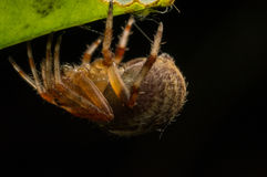 Spider. On black background by night photograph Royalty Free Stock Photos
