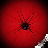 Spider black widow Royalty Free Stock Images