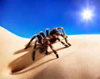 Spider on body Stock Images