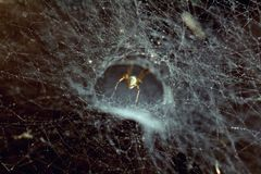 Spider bottom on lighten spider web in the sunshine and darkness, abstract spinning universe pattern Royalty Free Stock Photos