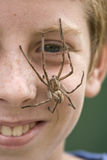 Spider Boy 1. Giant hairy rain spider perched on smiling boy's face Royalty Free Stock Image