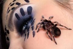 Spider Brachypelma smithi on girl's cheek. Close-up of spider Brachypelma smithi sitting on girl's cheek Royalty Free Stock Images