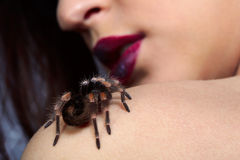 Spider Brachypelma smithi on girl's shoulder. Close up of girl's face lower part and spider Brachypelma smithi sitting one her shoulder Stock Photos