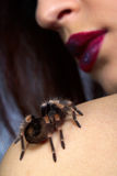 Spider Brachypelma smithi on girl's shoulder Royalty Free Stock Image