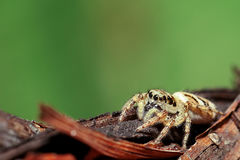 Spider on a branch Stock Photography