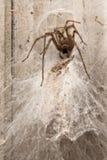 Spider building web Stock Photo