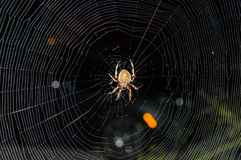 Spider building a web in the dark. A spider is building a web in the dark Royalty Free Stock Images