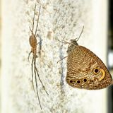 Spider & butterfly. They were face to face for a whole day but the butterfly flew away. Amazing. Hd view stock image