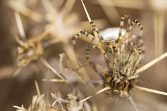 A spider camouflage Royalty Free Stock Photography
