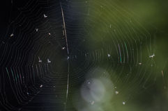 Spider canvas and flies on a green background Royalty Free Stock Photography