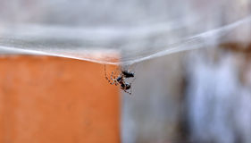 A spider is captive. To its prey in its network Stock Images