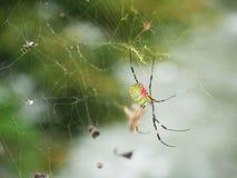 Spider catch prey Stock Photography