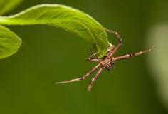 Spider catcher Royalty Free Stock Photo