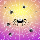 Spider catching flies Royalty Free Stock Photos