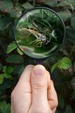 Spider Catching Hover-Fly Royalty Free Stock Image