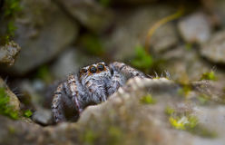 The spider in the cave Royalty Free Stock Image