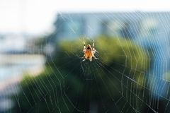 Spider in the center of its web Stock Photo