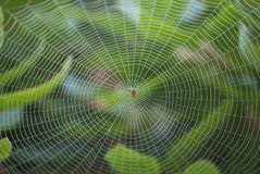 Spider in Center of Large Web Stock Image