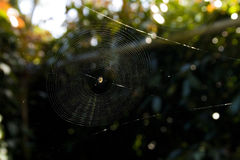 Spider in Center of Large Web Against Black and Green Bokeh Background Royalty Free Stock Photo