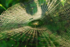 Spider in center of web Stock Images