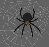Spider in the center of the web royalty free stock image