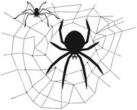Spider in the center of the web stock photos