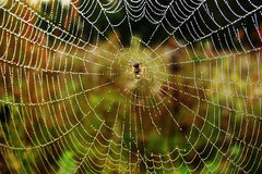 Spider in centre of the web Stock Photography
