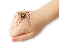 Spider on the children fist Royalty Free Stock Image