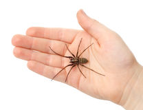 Spider on the children hand Royalty Free Stock Photography