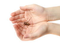 Spider in the childrens hands Stock Images