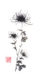 Spider chrysanthemums Japanese style original sumi-e ink painting. Hieroglyph featured means sincerity. Great for greeting cards or texture design Royalty Free Stock Photo
