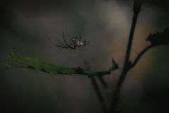 Spider clinging over a leaf Royalty Free Stock Photo