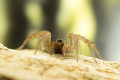 Spider close up Royalty Free Stock Photos