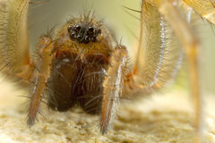 Spider close up Royalty Free Stock Photo
