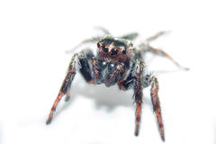 Spider. Close up. Royalty Free Stock Photos