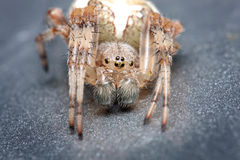 Spider. Close up. Stock Images