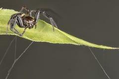 Spider close up portrait on a leaf Stock Images