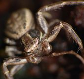 Macro of a Spider close up shot royalty free stock photography