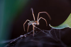 Spider close up. Spider on the web in garden Royalty Free Stock Photos