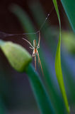 Spider close up. Spider on the web in garden Royalty Free Stock Images
