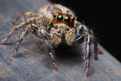 Spider Closeup Royalty Free Stock Photos