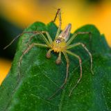 Spider. Closeup of the beautiful spider in the natural Stock Image