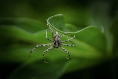 Spider. Closeup spider natural habit animal creepy stock photography