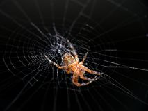 Spider on cobweb Royalty Free Stock Photography