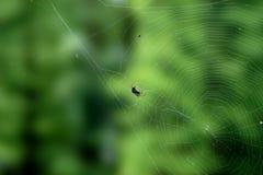 Spider and cobweb Royalty Free Stock Image