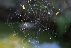 Spider Cobweb Royalty Free Stock Photos