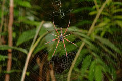 Spider in the cobweb. Spider caught the fly and eats her alive. Spider on a spider web in wild nature Stock Image