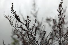 Spider cobweb and dew drops on branches Stock Photos